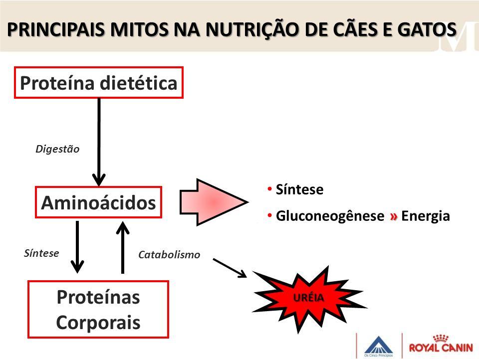 PRINCIPAIS MITOS NA NUTRIÇÃO DE CÃES E GATOS Síntese Proteína dietética Aminoácidos Proteínas Corporais Síntese » Gluconeogênese » Energia Digestão UR