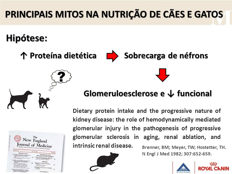 Hipótese: Dietary protein intake and the progressive nature of kidney disease: the role of hemodynamically mediated glomerular injury in the pathogenesis of progressive glomerular sclerosis in aging, renal ablation, and intrinsic renal disease.
