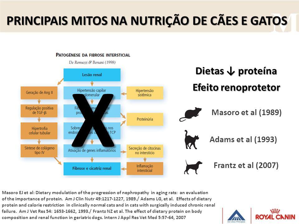 PRINCIPAIS MITOS NA NUTRIÇÃO DE CÃES E GATOS Modelo massa renal reduzida (nefroectomia) Adams et al (1993): Grupos proteína Frantz et al (2007): uréia sérica e microalbinúria transitória natural .
