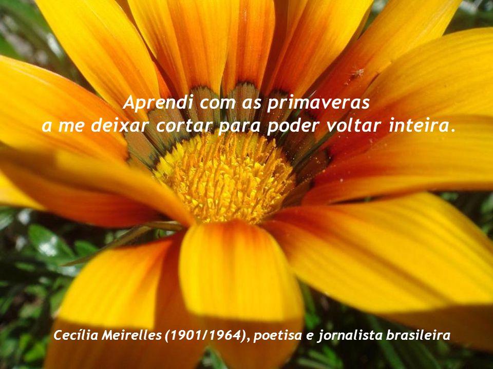 Eu sou aquela mulher que fez a escalada da montanha da vida removendo pedras e plantando flores. Cora Coralina (1889/1985), poetisa e contista brasile