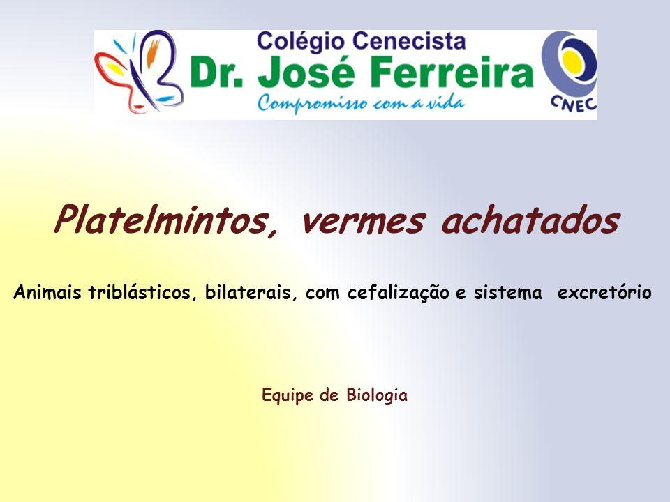 Platelmintos, vermes achatados Equipe de Biologia Animais triblásticos, bilaterais, com cefalização e sistema excretório
