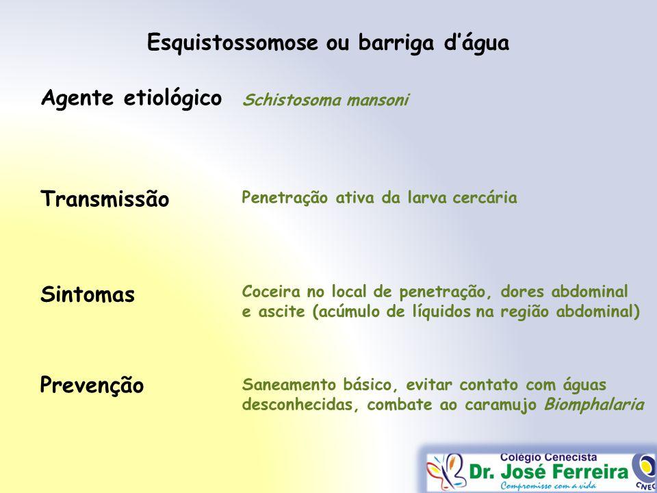 Esquistossomose ou barriga dágua Transmissão Sintomas Prevenção Agente etiológico