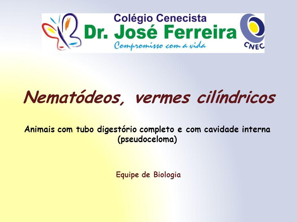 Nematódeos, vermes cilíndricos Equipe de Biologia Animais com tubo digestório completo e com cavidade interna (pseudoceloma)