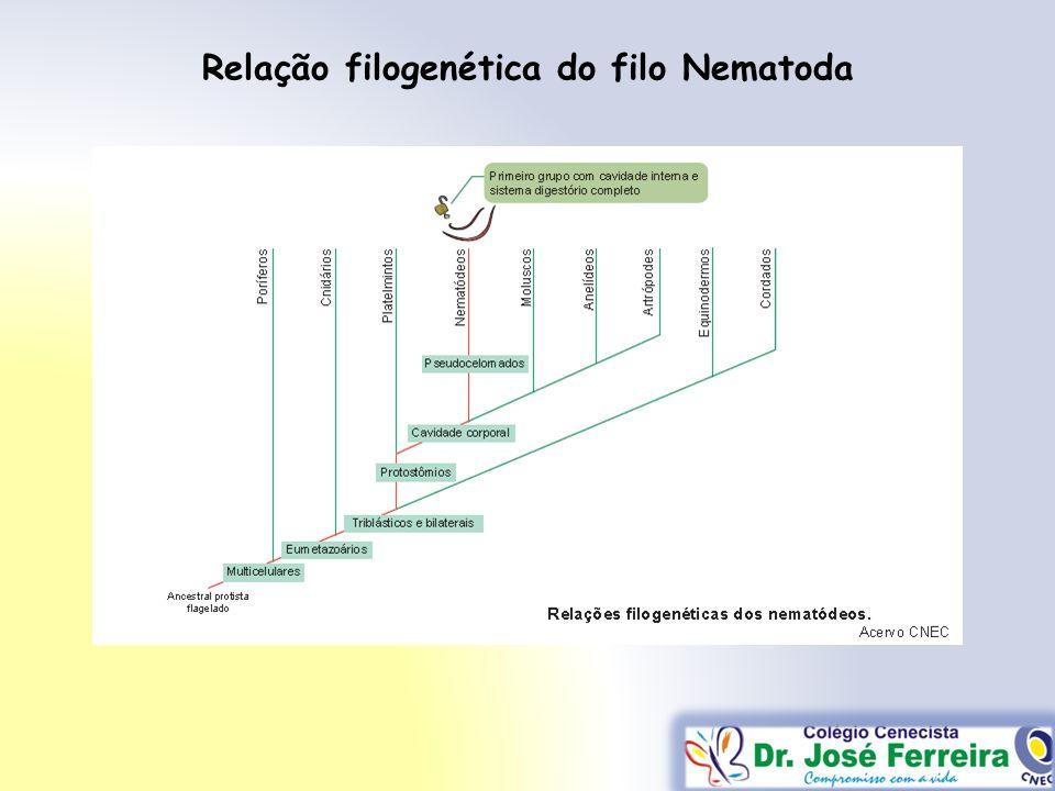 Relação filogenética do filo Nematoda