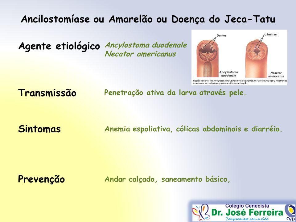 Ancilostomíase ou Amarelão ou Doença do Jeca-Tatu Transmissão Sintomas Prevenção Agente etiológico