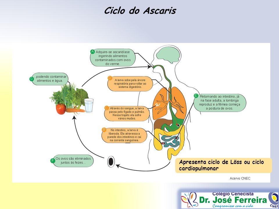 Ciclo do Ascaris Apresenta ciclo de Löss ou ciclo cardiopulmonar