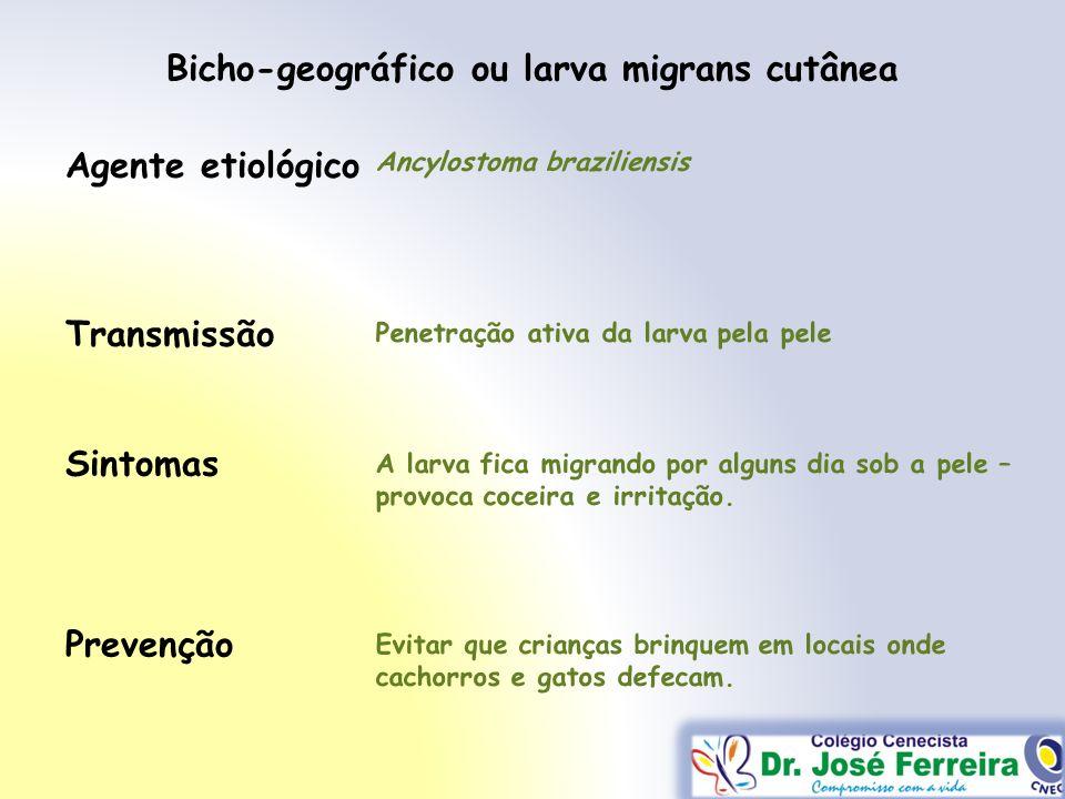 Transmissão Sintomas Prevenção Agente etiológico Bicho-geográfico ou larva migrans cutânea