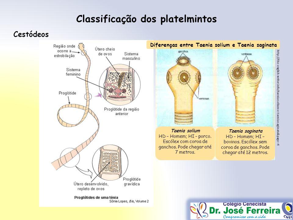 Classificação dos platelmintos Cestódeos http://the-english-writer.info/taenia-solium-e-taenia-saginata&page=4 Taenia solium HD – Homem; HI – porco. E