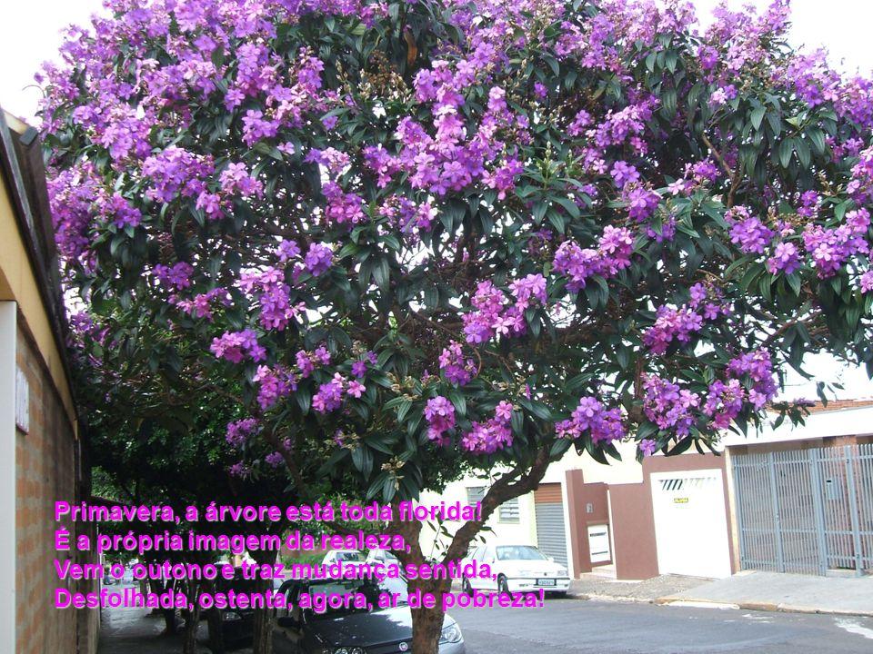 Primavera, a árvore está toda florida.