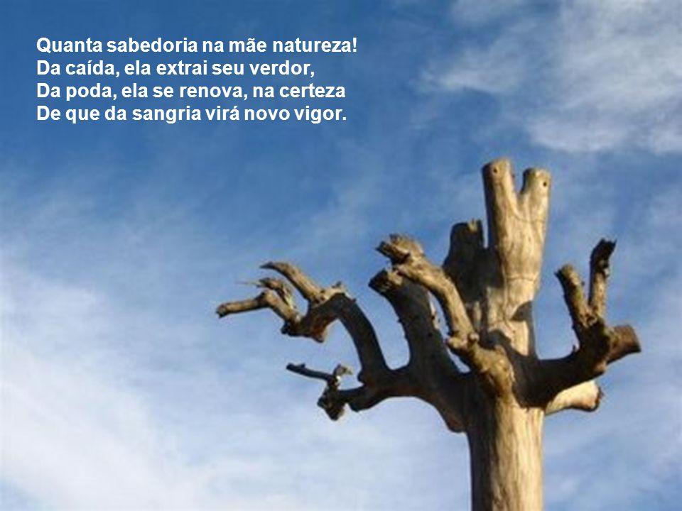 Quanta sabedoria na mãe natureza.