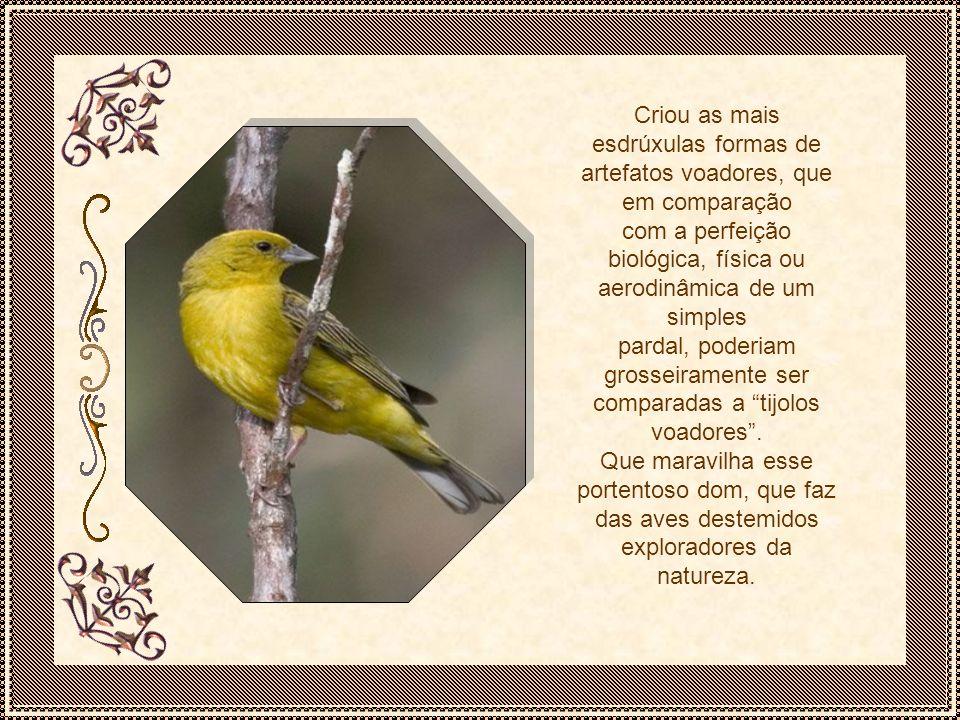 A natureza dotou as aves com o dom de voar, proporcionando a maravilhosa condição de se lançarem ao espaço e atingirem, gloriosamente, o sensacional prazer de sentirem a liberdade na sua mais profunda plenitude.
