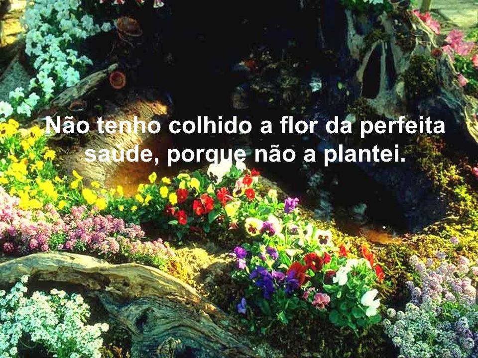 Não tenho colhido a Flor do Perdão, porque não a plantei… Montagem - Tania Texto-Silvia Schmidt Música-Richard Cleydermant