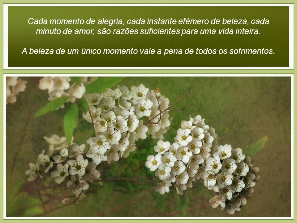 Cada momento de alegria, cada instante efêmero de beleza, cada minuto de amor, são razões suficientes para uma vida inteira.
