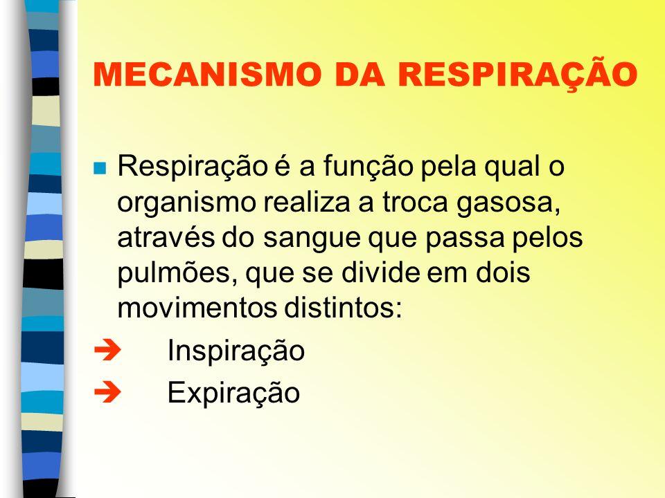 MECANISMO DA RESPIRAÇÃO n Respiração é a função pela qual o organismo realiza a troca gasosa, através do sangue que passa pelos pulmões, que se divide