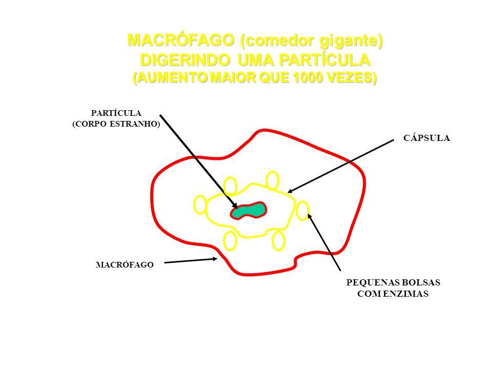 LADO AR O 2 CO 2 PARTÍCULA PAREDE ALVÉOLAR (O,2µm) CAPILAR SANGÜÍNEO ( DIÂMETRO 1µm) HEMÁCIA MACRÓFAGO (>10µm) SANGUE DEFESAS NATURAIS DO ORGANISMO SI