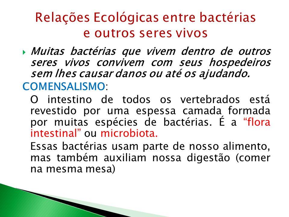 Muitas bactérias que vivem dentro de outros seres vivos convivem com seus hospedeiros sem lhes causar danos ou até os ajudando. COMENSALISMO: O intest
