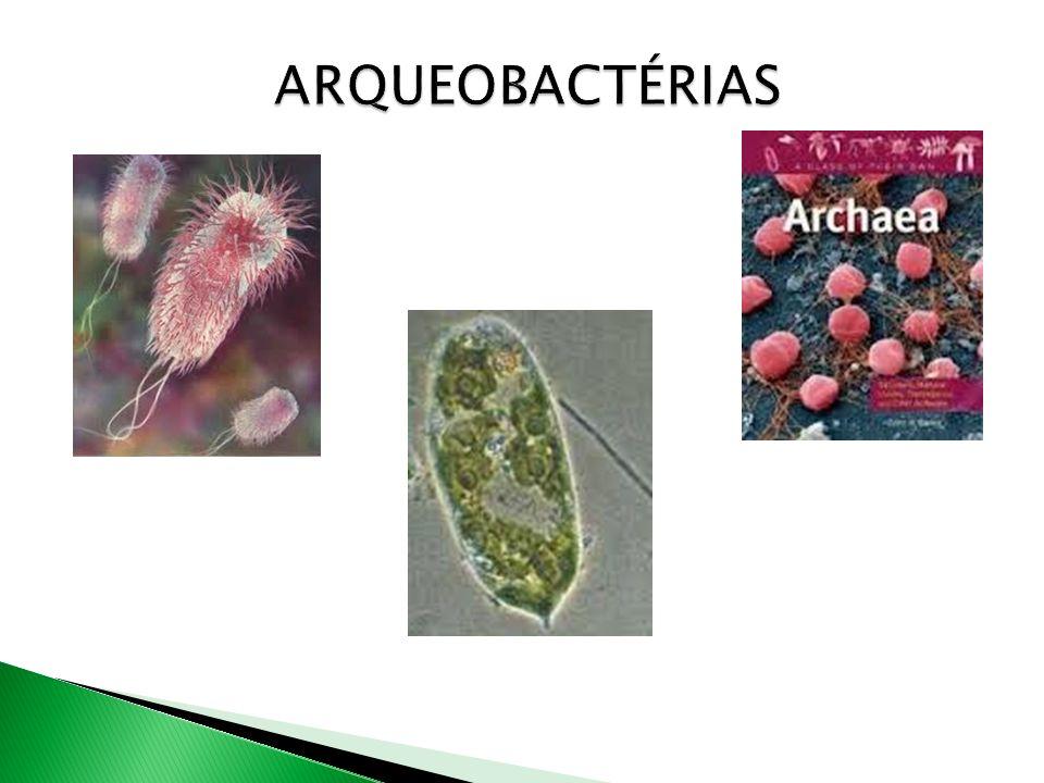 Algumas bactérias se reproduzem sexuadamente por conjugação.