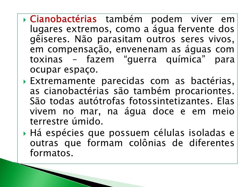 Cianobactérias também podem viver em lugares extremos, como a água fervente dos gêiseres. Não parasitam outros seres vivos, em compensação, envenenam