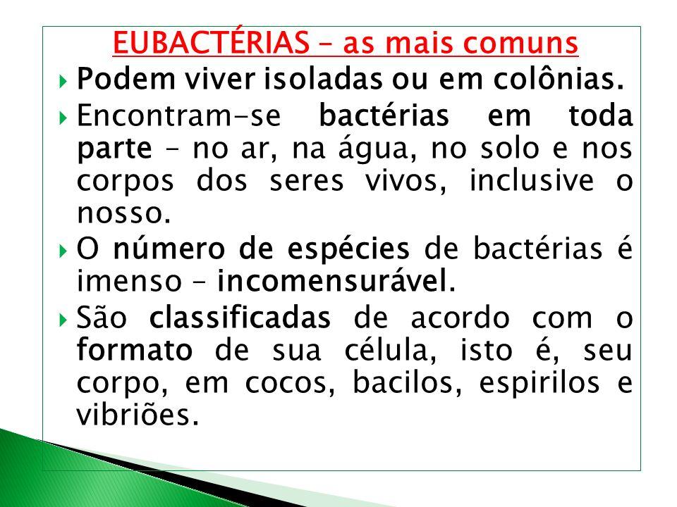 EUBACTÉRIAS – as mais comuns Podem viver isoladas ou em colônias. Encontram-se bactérias em toda parte – no ar, na água, no solo e nos corpos dos sere