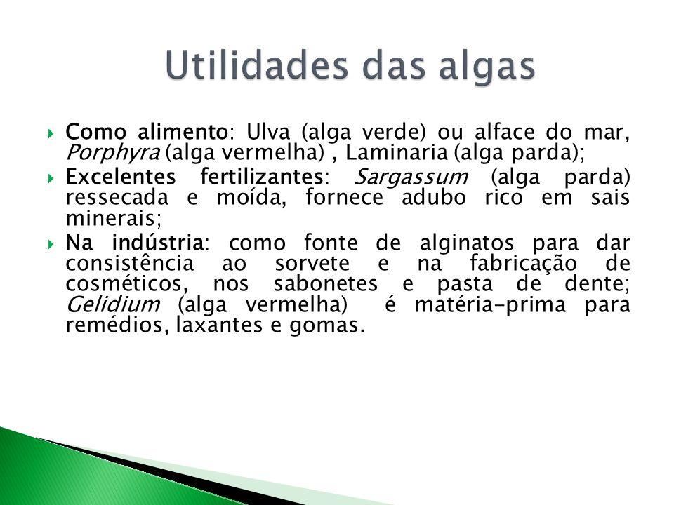 Como alimento: Ulva (alga verde) ou alface do mar, Porphyra (alga vermelha), Laminaria (alga parda); Excelentes fertilizantes: Sargassum (alga parda) ressecada e moída, fornece adubo rico em sais minerais; Na indústria: como fonte de alginatos para dar consistência ao sorvete e na fabricação de cosméticos, nos sabonetes e pasta de dente; Gelidium (alga vermelha) é matéria-prima para remédios, laxantes e gomas.
