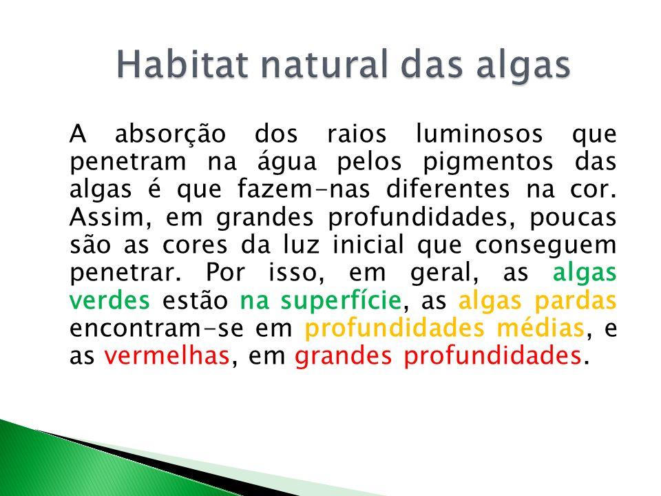 A absorção dos raios luminosos que penetram na água pelos pigmentos das algas é que fazem-nas diferentes na cor.