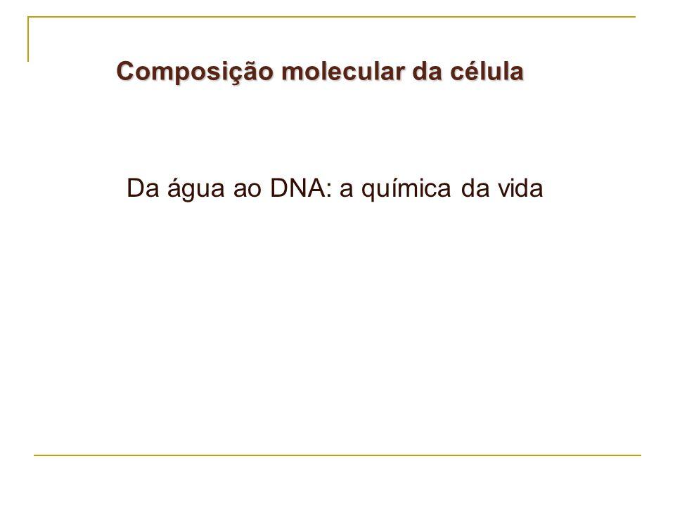 Composição molecular da célula Da água ao DNA: a química da vida