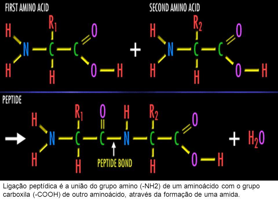 Ligação peptídica é a união do grupo amino (-NH2) de um aminoácido com o grupo carboxila (-COOH) de outro aminoácido, através da formação de uma amida