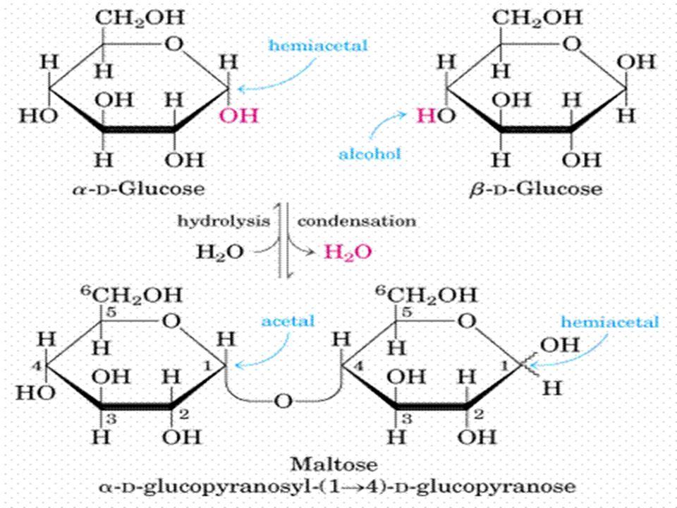 hidroxila de uma outra molécula de açúcar.