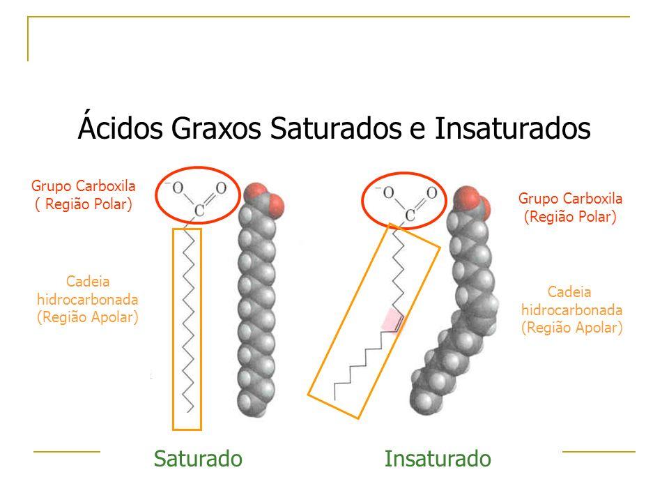Grupo Carboxila ( Região Polar) Cadeia hidrocarbonada (Região Apolar) SaturadoInsaturado Cadeia hidrocarbonada (Região Apolar) Grupo Carboxila (Região