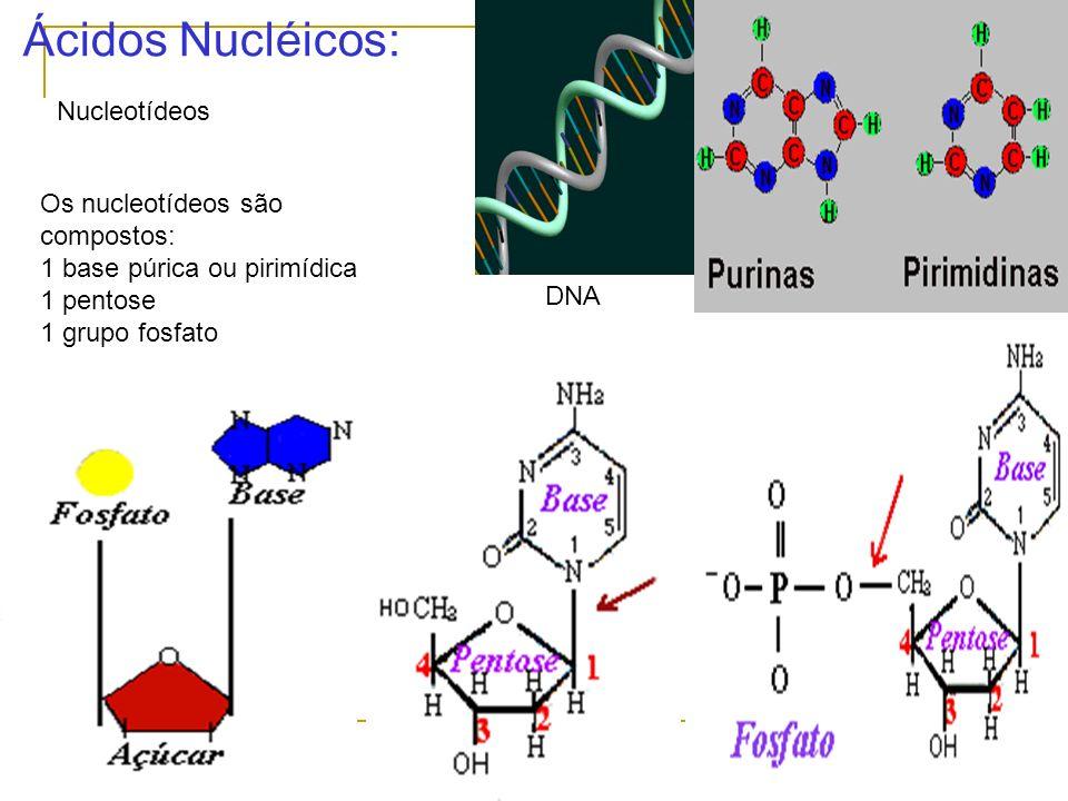 Ácidos Nucléicos: Nucleotídeos Os nucleotídeos são compostos: 1 base púrica ou pirimídica 1 pentose 1 grupo fosfato DNA