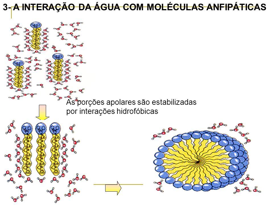 3- A INTERAÇÃO DA ÁGUA COM MOLÉCULAS ANFIPÁTICAS As porções apolares são estabilizadas por interações hidrofóbicas
