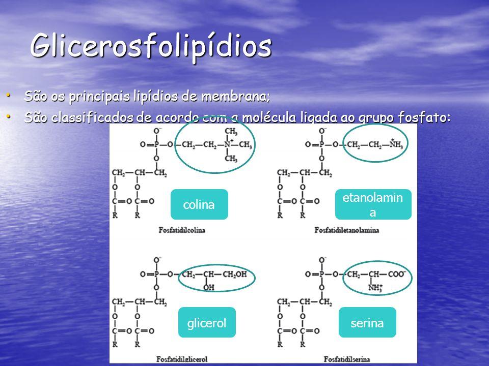 Glicerosfolipídios São os principais lipídios de membrana; São os principais lipídios de membrana; São classificados de acordo com a molécula ligada ao grupo fosfato : São classificados de acordo com a molécula ligada ao grupo fosfato : colina etanolamin a glicerolserina