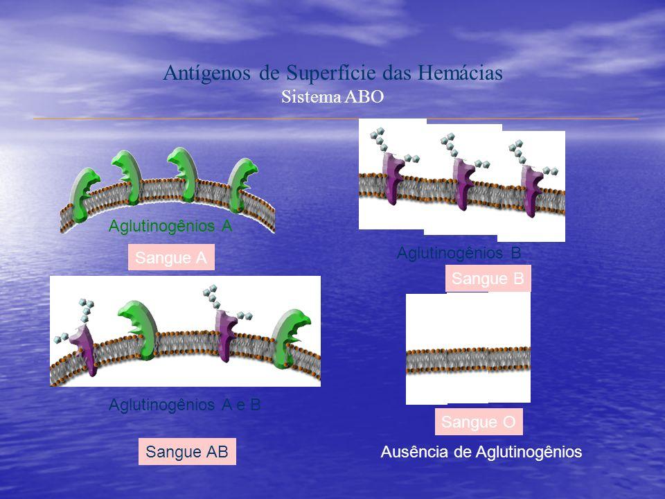Antígenos de Superfície das Hemácias Sistema ABO Aglutinogênios A Aglutinogênios A e B Aglutinogênios B Ausência de Aglutinogênios Sangue A Sangue B Sangue AB Sangue O