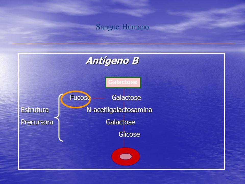 Sangue Humano Antígeno B Antígeno B Fucose Galactose Fucose Galactose Estrutura N-acetilgalactosamina Precursora Galactose Glicose Glicose Galactose