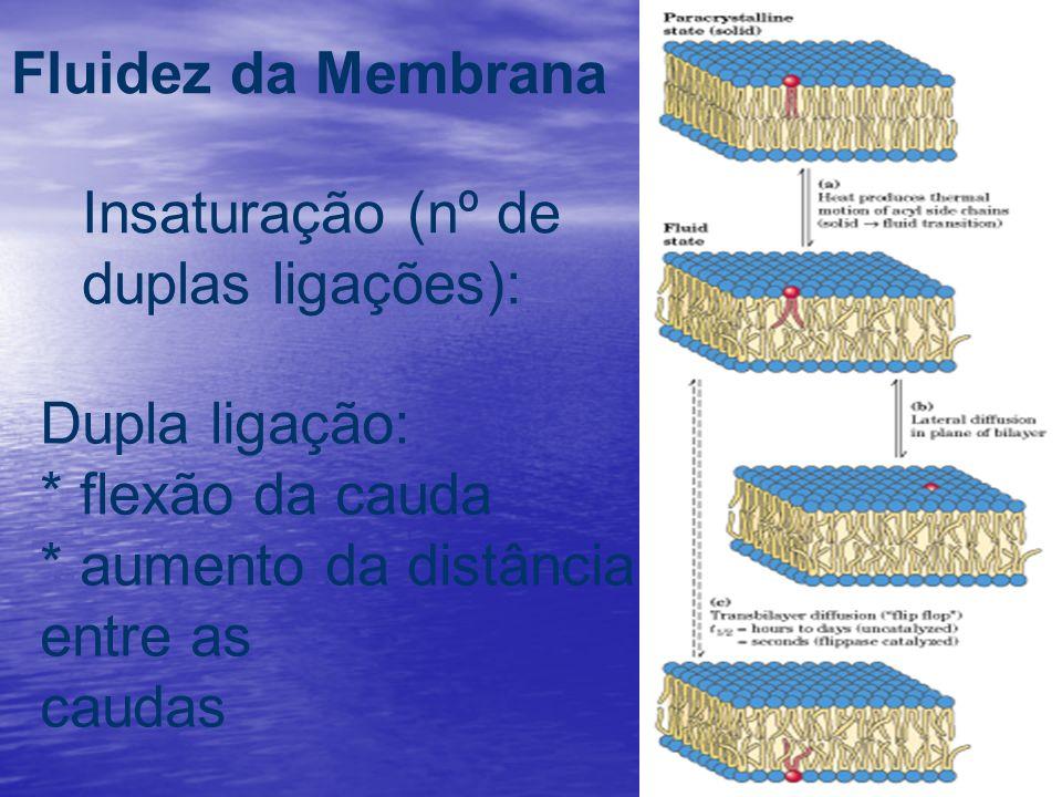 Fluidez da Membrana Insaturação (nº de duplas ligações): Dupla ligação: * flexão da cauda * aumento da distância entre as caudas