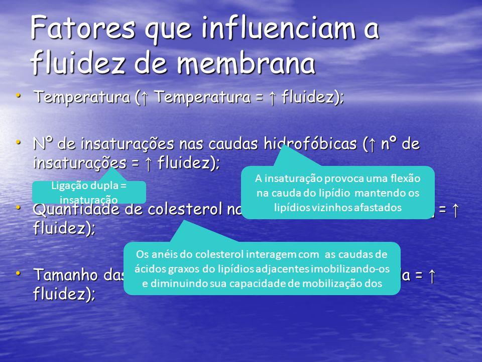 Fatores que influenciam a fluidez de membrana Temperatura ( Temperatura = fluidez); Temperatura ( Temperatura = fluidez); Nº de insaturações nas caudas hidrofóbicas ( nº de insaturações = fluidez); Nº de insaturações nas caudas hidrofóbicas ( nº de insaturações = fluidez); Quantidade de colesterol na membrana ( [colesterol] = fluidez); Quantidade de colesterol na membrana ( [colesterol] = fluidez); Tamanho das caudas dos lipídios ( menor a cauda = fluidez); Tamanho das caudas dos lipídios ( menor a cauda = fluidez); Ligação dupla = insaturação A insaturação provoca uma flexão na cauda do lipídio mantendo os lipídios vizinhos afastados Os anéis do colesterol interagem com as caudas de ácidos graxos do lipídios adjacentes imobilizando-os e diminuindo sua capacidade de mobilização dos