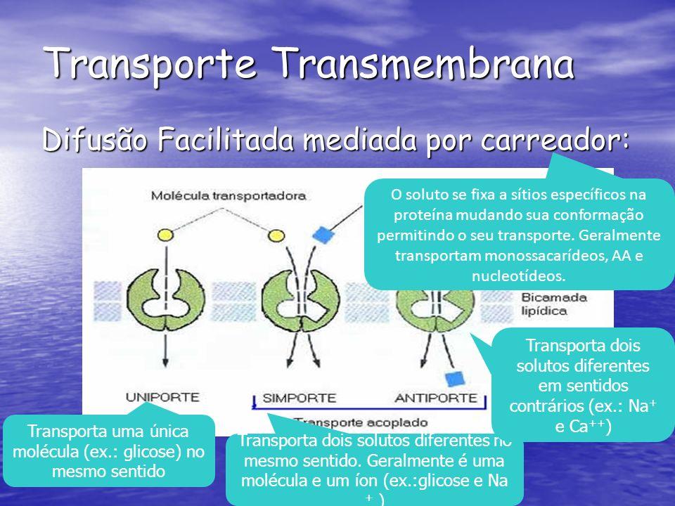 Transporte Transmembrana Difusão Facilitada mediada por carreador: Transporta uma única molécula (ex.: glicose) no mesmo sentido Transporta dois solutos diferentes no mesmo sentido.