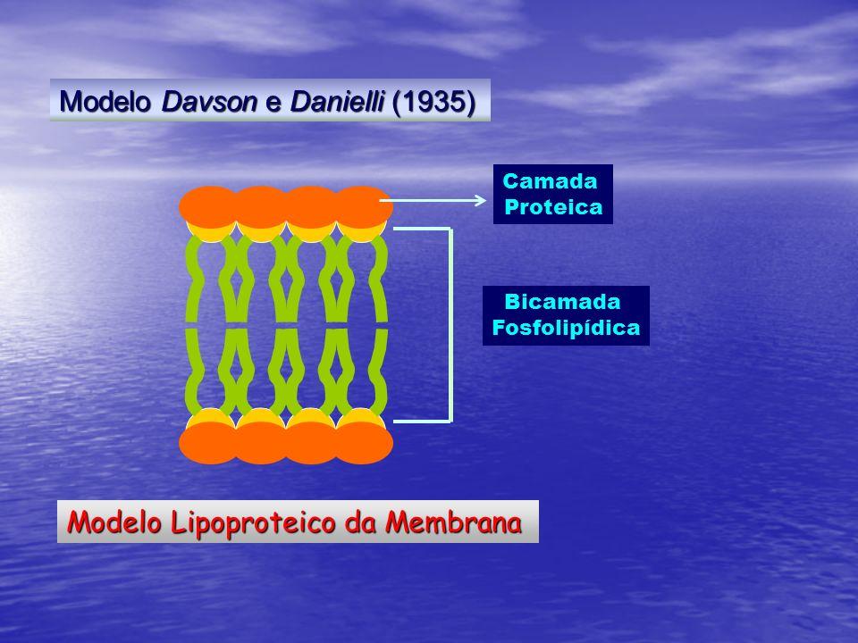 Modelo Lipoproteico da Membrana Bicamada Fosfolipídica Camada Proteica Modelo Davson e Danielli (1935)