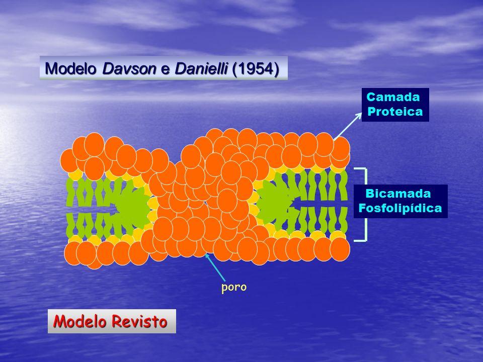 Modelo Revisto Modelo Davson e Danielli (1954) poro Camada Proteica Bicamada Fosfolipídica