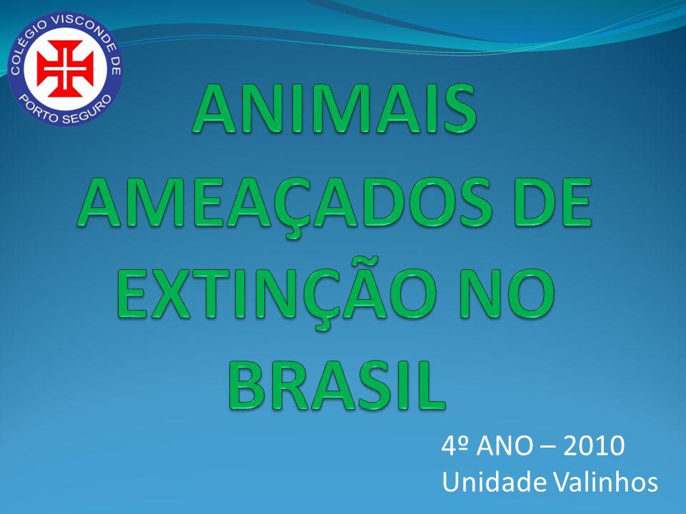 Animais ameaçados de extinção são aqueles que ainda existem na natureza, mas possuem poucos de sua espécie.