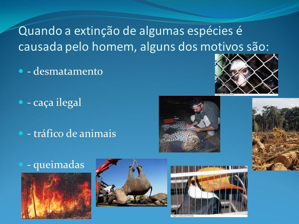 Quando a extinção de algumas espécies é causada pelo homem, alguns dos motivos são: - desmatamento - caça ilegal - tráfico de animais - queimadas