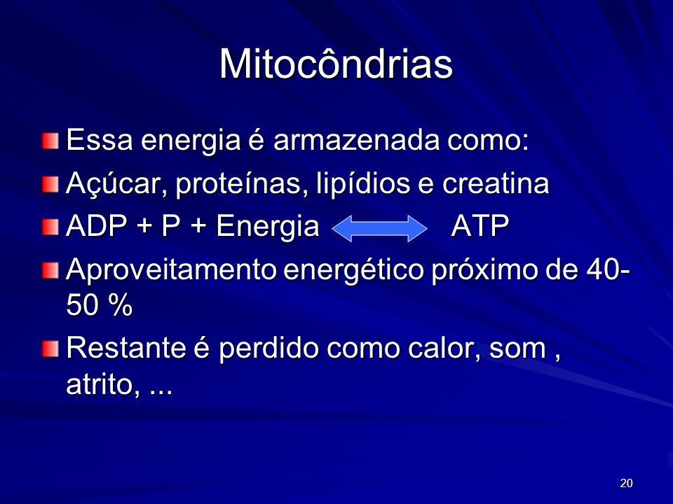 20 Mitocôndrias Essa energia é armazenada como: Açúcar, proteínas, lipídios e creatina ADP + P + Energia ATP Aproveitamento energético próximo de 40-