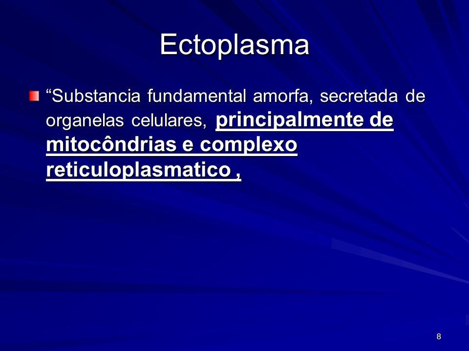 8 Ectoplasma Substancia fundamental amorfa, secretada de organelas celulares, principalmente de mitocôndrias e complexo reticuloplasmatico,