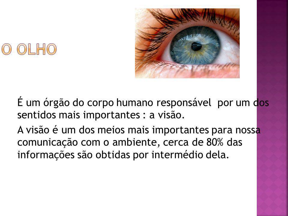 É um órgão do corpo humano responsável por um dos sentidos mais importantes : a visão. A visão é um dos meios mais importantes para nossa comunicação