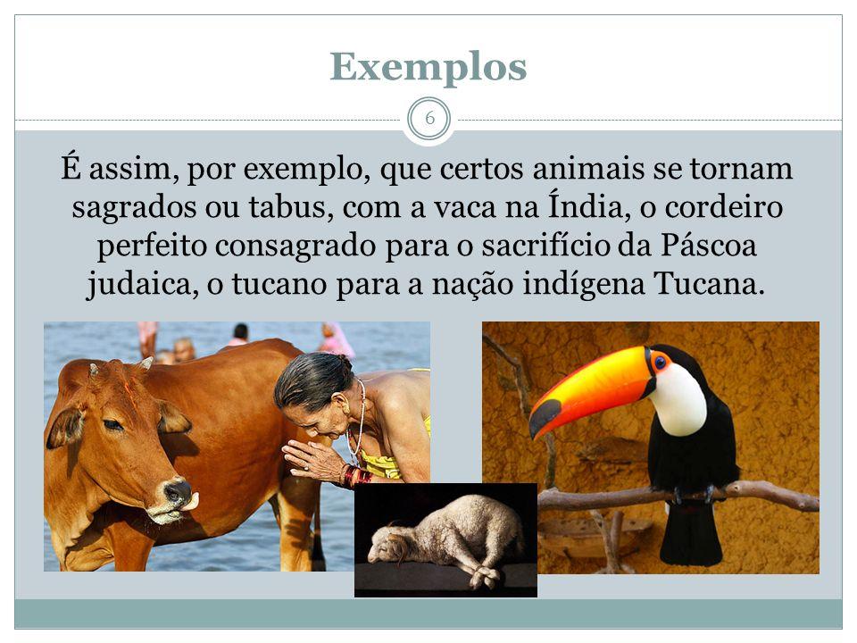 Exemplos 6 É assim, por exemplo, que certos animais se tornam sagrados ou tabus, com a vaca na Índia, o cordeiro perfeito consagrado para o sacrifício da Páscoa judaica, o tucano para a nação indígena Tucana.