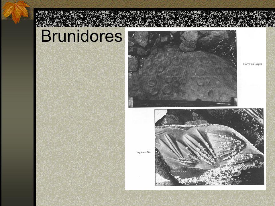 Brunidores