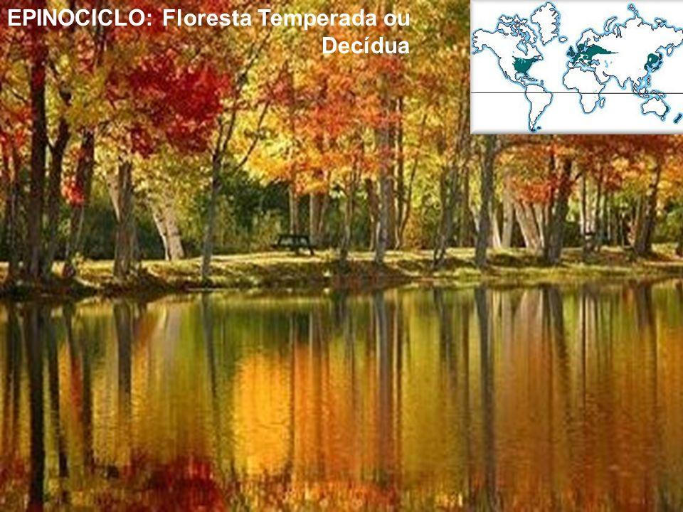 EPINOCICLO: Floresta Temperada ou Decídua