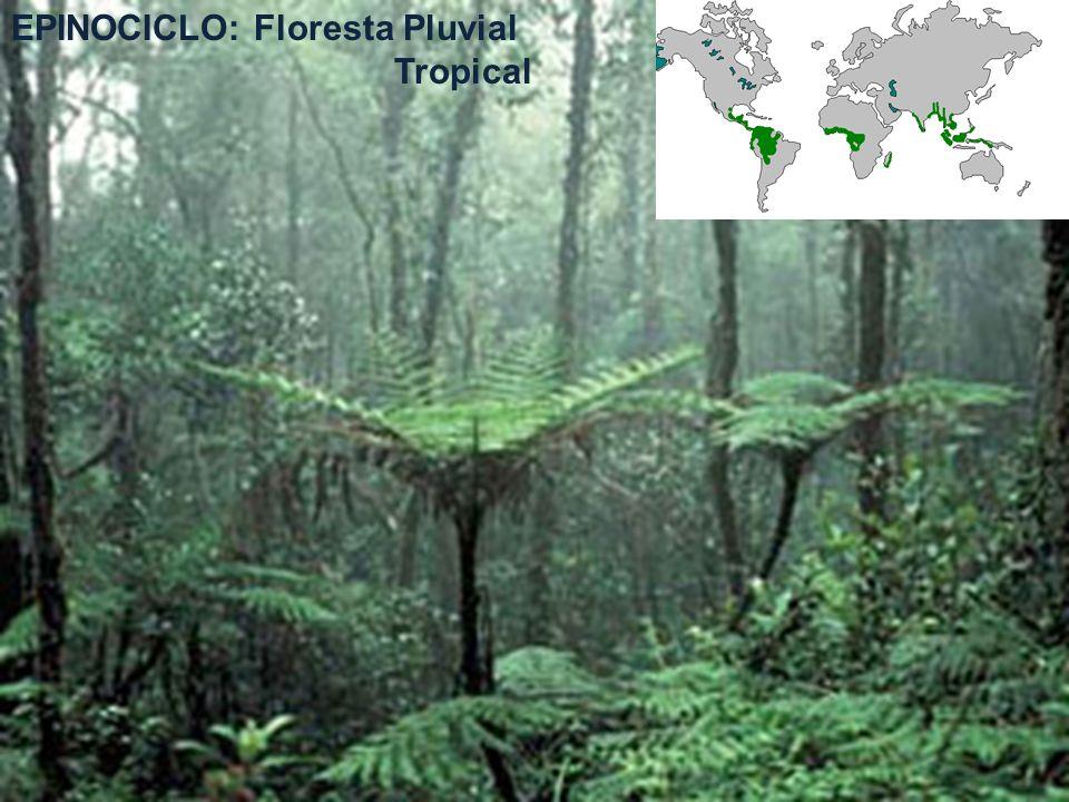 EPINOCICLO: Floresta Pluvial Tropical