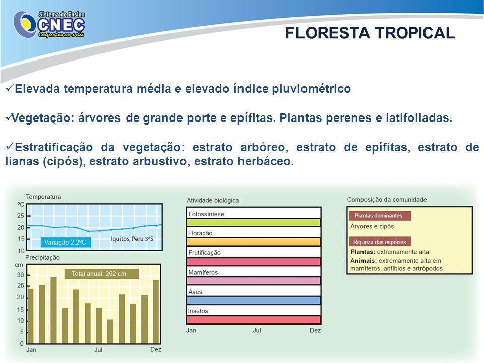 Elevada temperatura média e elevado índice pluviométrico Vegetação: árvores de grande porte e epífitas. Plantas perenes e latifoliadas. Estratificação