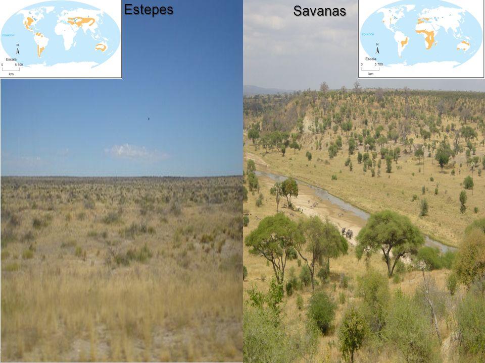 EstepesSavanas